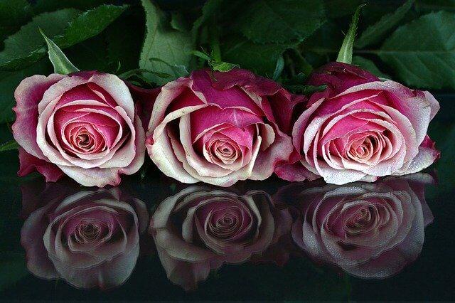 3つのバラ