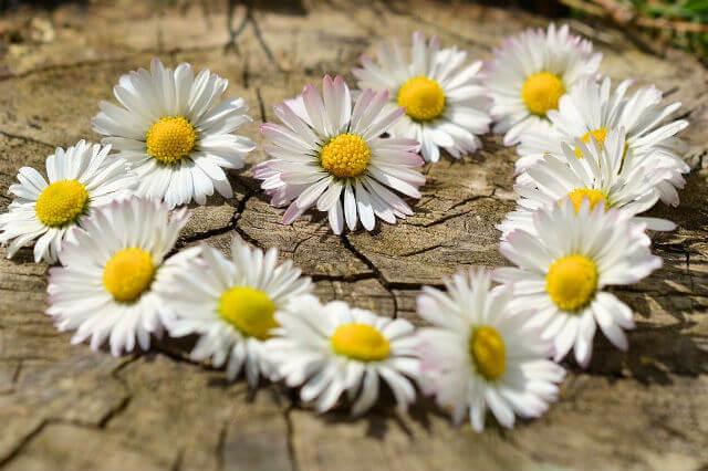 花で作られたハートの形